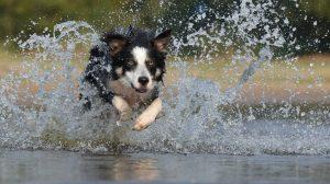 kutya futás